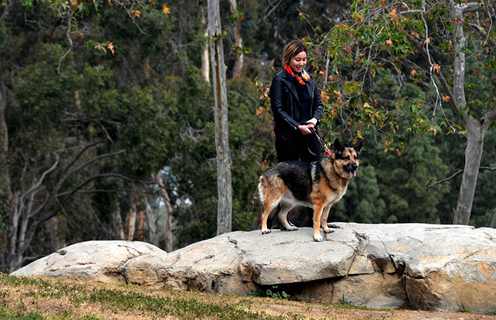 Cheryl Chan walking Harriet the German shepherd dog, on a big rock in the woods