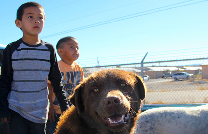 Brown dog looking at the camera with two kids behind him