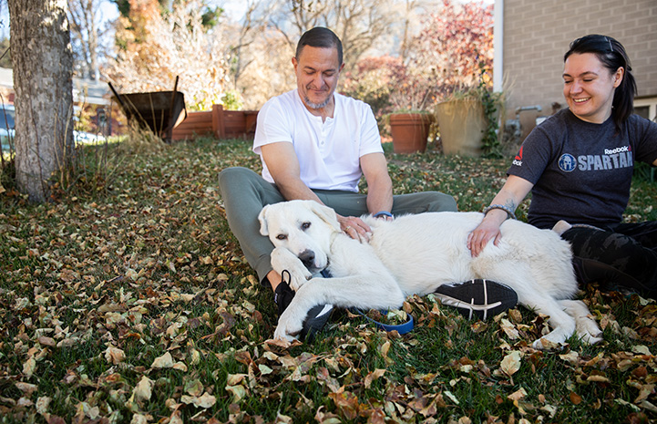 Eddie the great Pyrenees lying outside on the grass with his new family