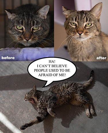 Collage of before and after photos of Booh the cat