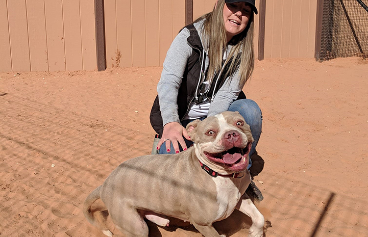 Scrappy a tan pit bull type dog on a leash and excited to be out in the desert