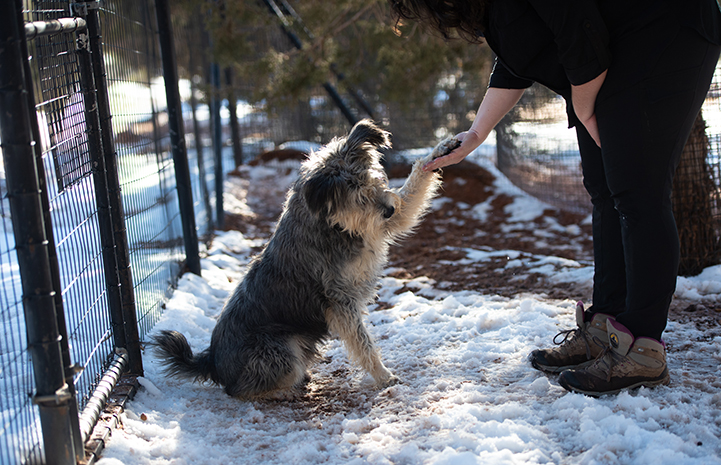 Jace the dog shaking hands with a woman while outside in the snow