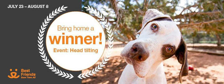 Dog with tilted head with text Bring home a winner! Event: Head tilting, July 23-Aug 8 adoption promotion