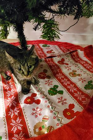 Aslan the kitten on the skirt under a Christmas tree