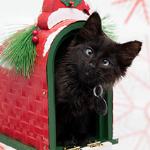 Kitten for the holidays