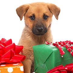 Puppy sitting amongst holiday gifts