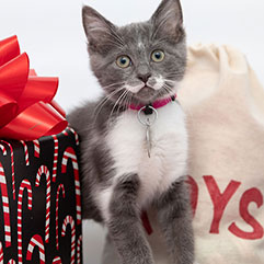Kitten standing in front of gifts