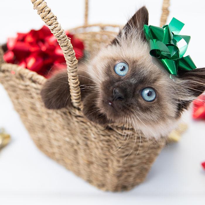 Kitten in a basket wearing a green bow