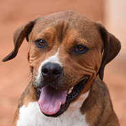 Adopt Holy Moly the dog available for adoption from Kanab