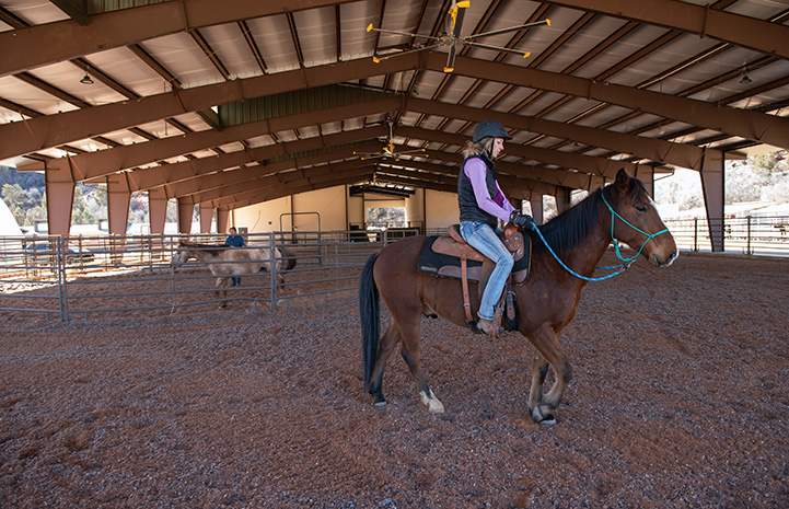 Woman riding Jasper the horse in an arena