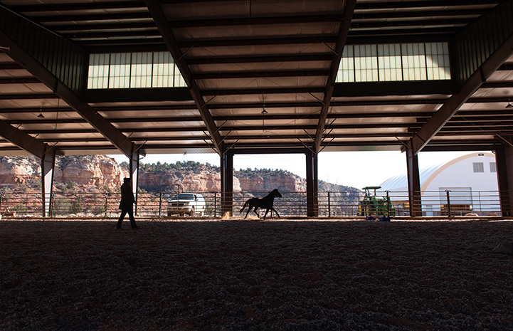 Silhouette of person and horse from within the arena
