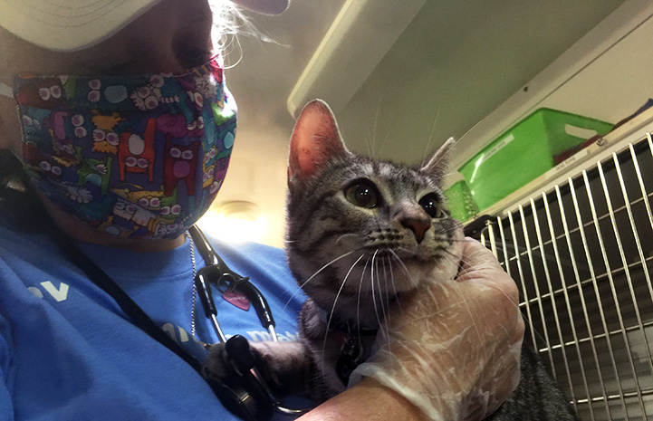 Person wearing a mask holding a tabby cat in front of some kennels