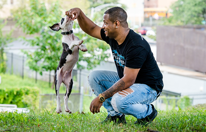 Squatting man holding up a treat with a small black and white dog or puppy jumping up to get it