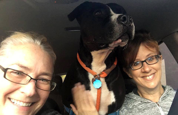 Huck the black and white pit bull terrier in between two women taking a car ride