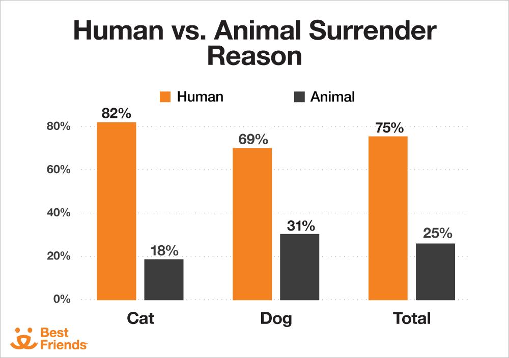 Human vs. Animal Surrender Reason