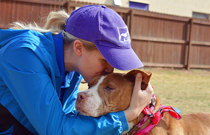 Woman wearing a hat giving a kiss to the top of the head of a brown and white pit-bull-terrier-type dog