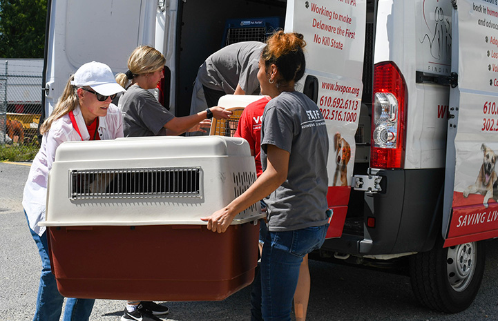 Women loading animals in crates into the back of a transport van
