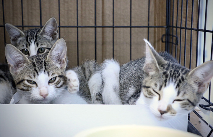 Kittens taking a nap in a kennel
