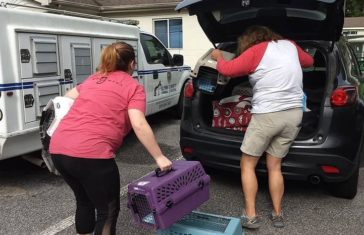 People loading cats in crates into a transport SUV