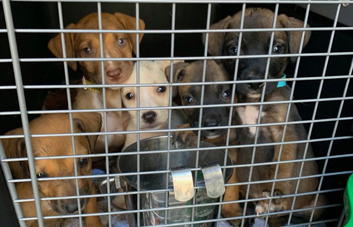 Puppies behind the bars of a transport crate