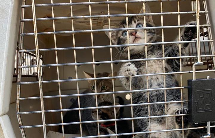 Kitten climbing the bars on the transport crate door