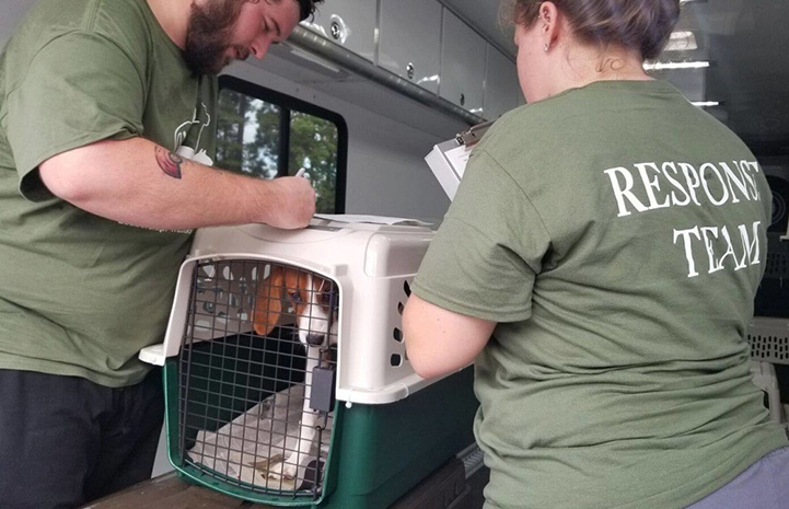 Man and woman moving a red and white hound in a create into a vehicle
