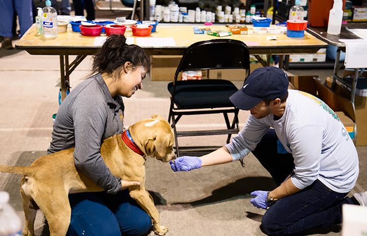 Kriz Landaverde helping at the NRG Arena after Hurricane Harvey