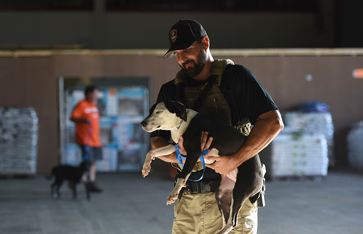 Michael Marmolejo from the Department of Justice volunteering with the dogs after Hurricane Harvey