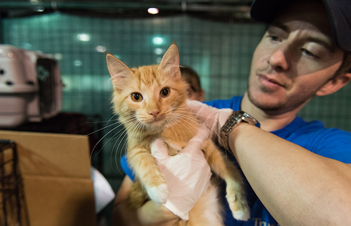 Man holding an orange tabby kitten who was rescued after Hurricane Harvey