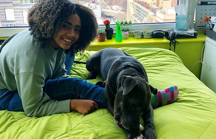 MacGregor the dog lying in bed with his person in New York City