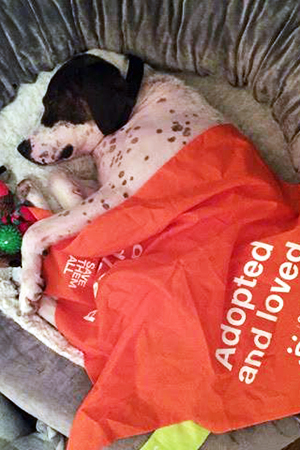 Sophia the dog is safe and snug in her bed at home