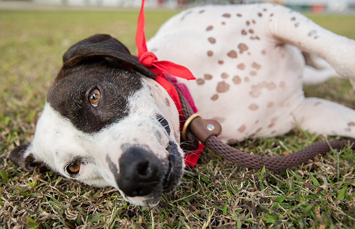 Hurricane Harvey dog Sophia on her road trip from Houston to New York City