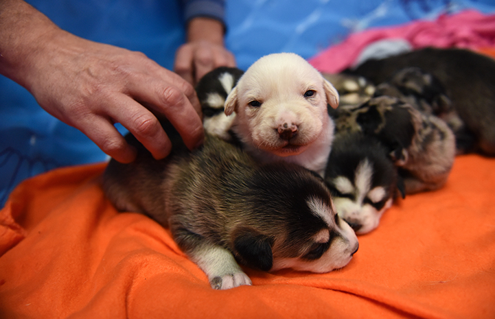 The Astro puppies are scheduled to move to Dogtown's puppy preschool just in time for Christmas