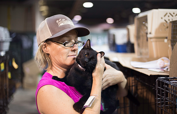 Laura Kephart helps care for more than 150 cats at the Pet Reunion Pavilion