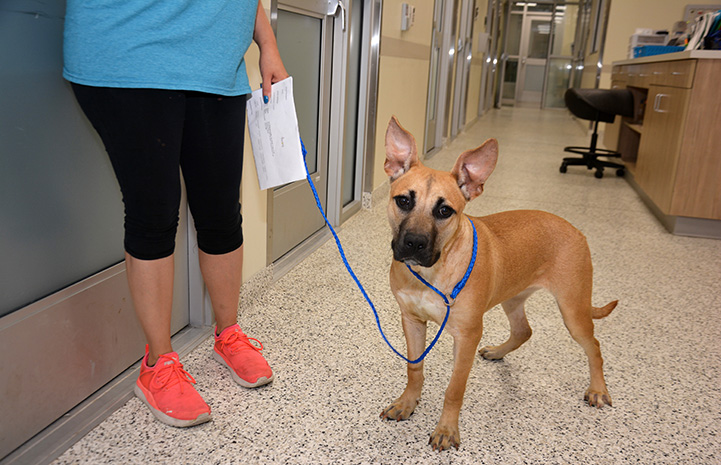 Abbigail the dog being led to her kennel in San Antonio