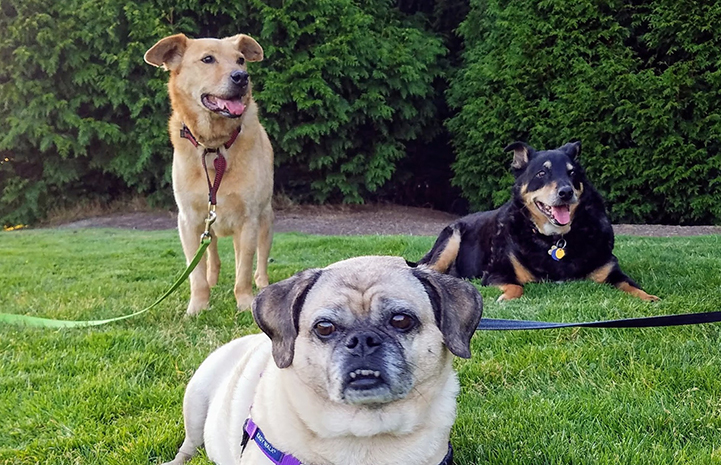 Houdini the dog with his two canine siblings, Crash and Mulan