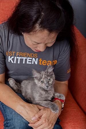 Woman wearing a Best Friends Kitten Team T-shirt holding Rogue, the dilute tortoiseshell kitten