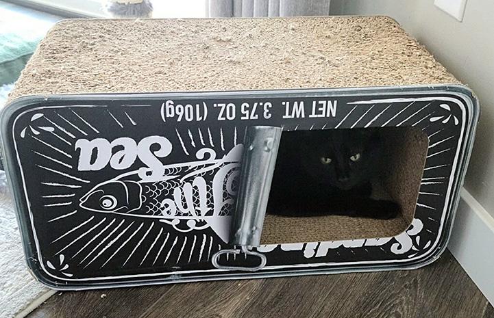 Ori the cat lying in a cardboard scratcher shaped like a sardine can