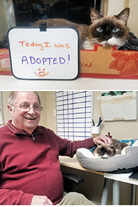 "Collage of two photos: one of Valerie the cat with a sign ""Today I was adopted"" and the second photo of BJ petting Valerie"