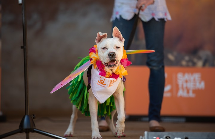 dog walks across the stage at Best Friends Animal Sanctuary