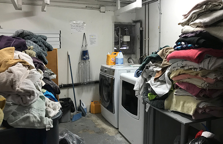 Large piles of linens in the Hopalong Animal Rescue laundry room
