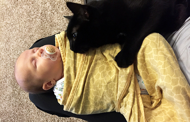 Bruce the cat lying by a young baby swaddled in a blanket