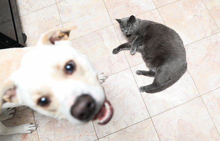 If you don't feel you can trust your dog around your cat, you should keep them apart