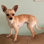 Adopt Jolene the dog available for adoption from Lexington