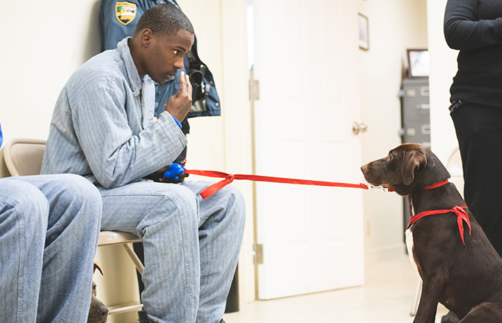 Incarcerated man sitting in a chair and getting a brown dog to look him in they eye