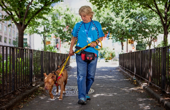 9/11 survivor Kathy Posekel walking a homeless brown pit bull dog in New York City