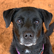 Adopt Kenya the dog available for adoption from Kanab