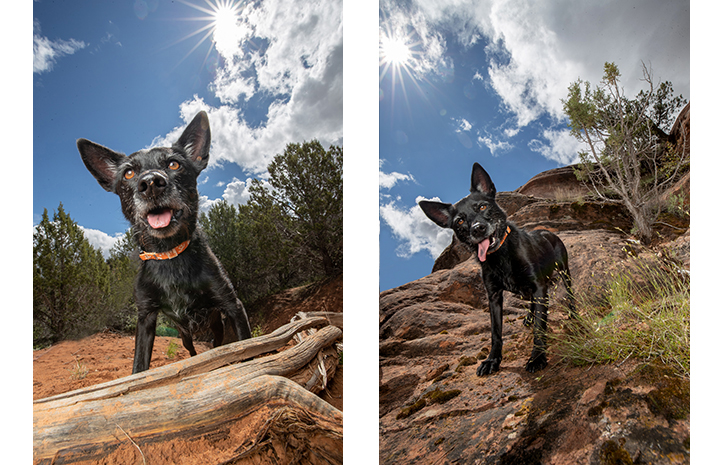 Two photo of Kiki the dog on a rock formation with blue skies, white clouds and the sun behind her