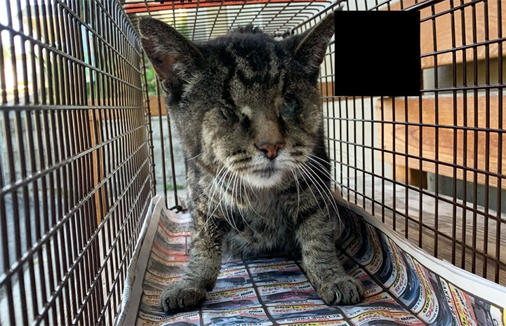 TJ the blind cat in a humane trap