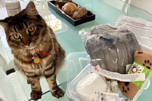Brown tabby cat sitting next to an open kitten kit